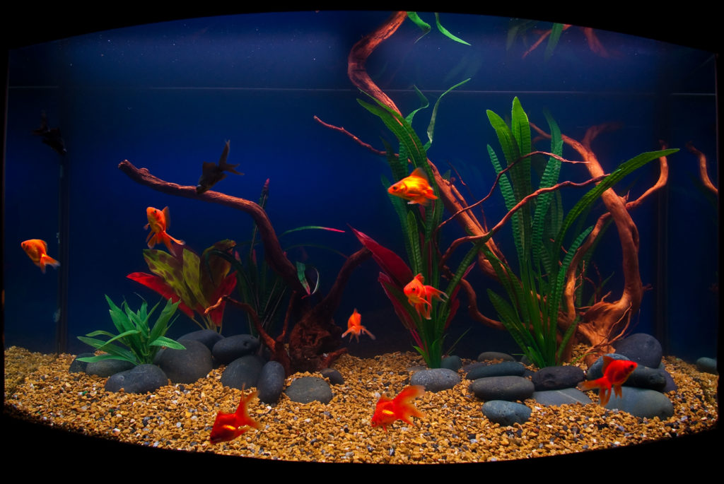 Goldfish aquarium design for Fancy fish tanks